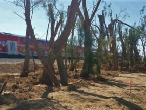 """مخطط لزراعة أشجار بغلاف غزة لـ""""التشويش"""" على صواريخ المقاومة"""