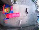 شاهد.. كلب يضحي بحياته وآخر ببصره لإنقاذ طفلة من أفعى خطيرة