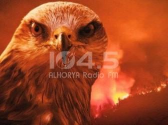 """حذر منه الرسول .. تعرف على """"الطائر الشرير"""" المسبب الاكبر لحرائق استراليا"""