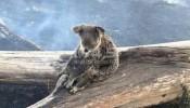 نفوق أكثر من مليار حيوان جراء حرائق أستراليا المتواصة
